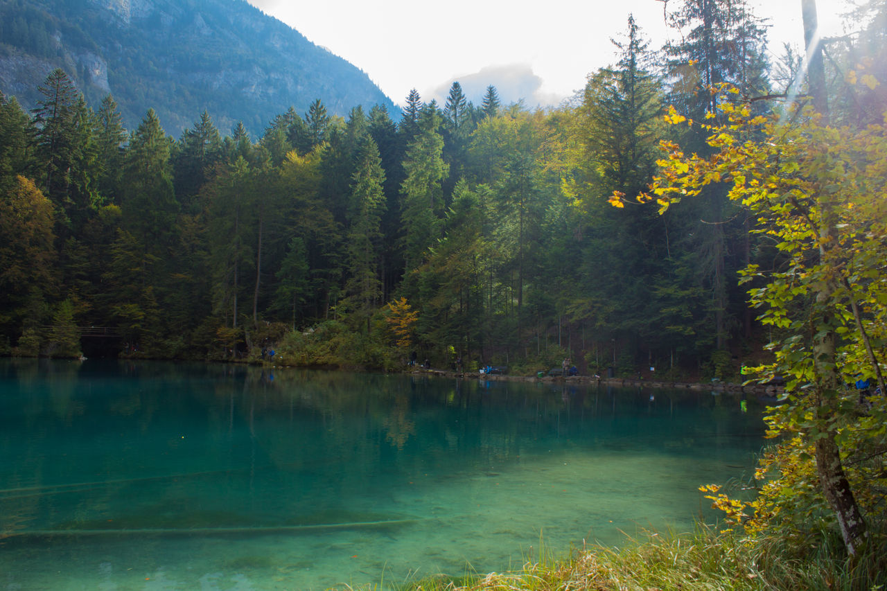 tree, nature, beauty in nature, lake, tranquility, water, scenics, outdoors, forest, growth, mountain, day, no people, scenery, sky