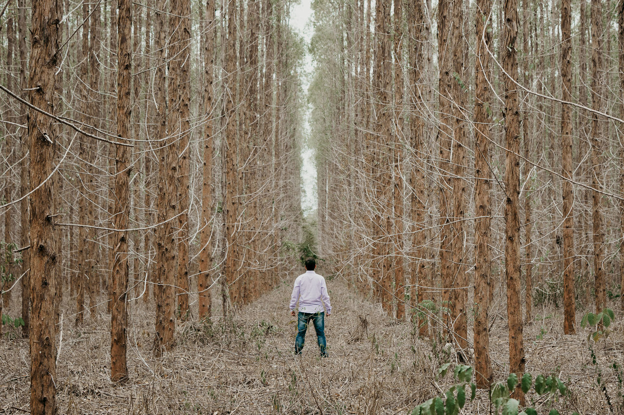 Nature Adult Adults Only Bare Tree Beauty In Nature Day Forest Growth Landscape Men Nature One Man Only One Person Outdoors People Real People Rear View Tree Tree Trunk