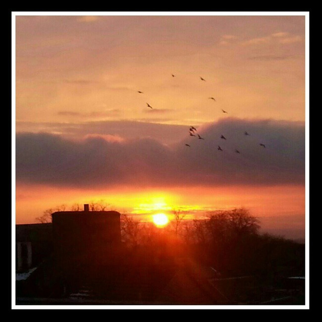 'In flight' Sunsets Sunset Sunsetporn Dunfermline fife Scotland birds Cloudporn sky skyporn skyback sky_collection igtube ig_sunsetshots igaddict Igers igdaily igshots tagstagram iphonesia most_deserving thebestshooter photooftheday insta_pick_skyart insta_pick insta_shutter instacanvas instasunsets instagood