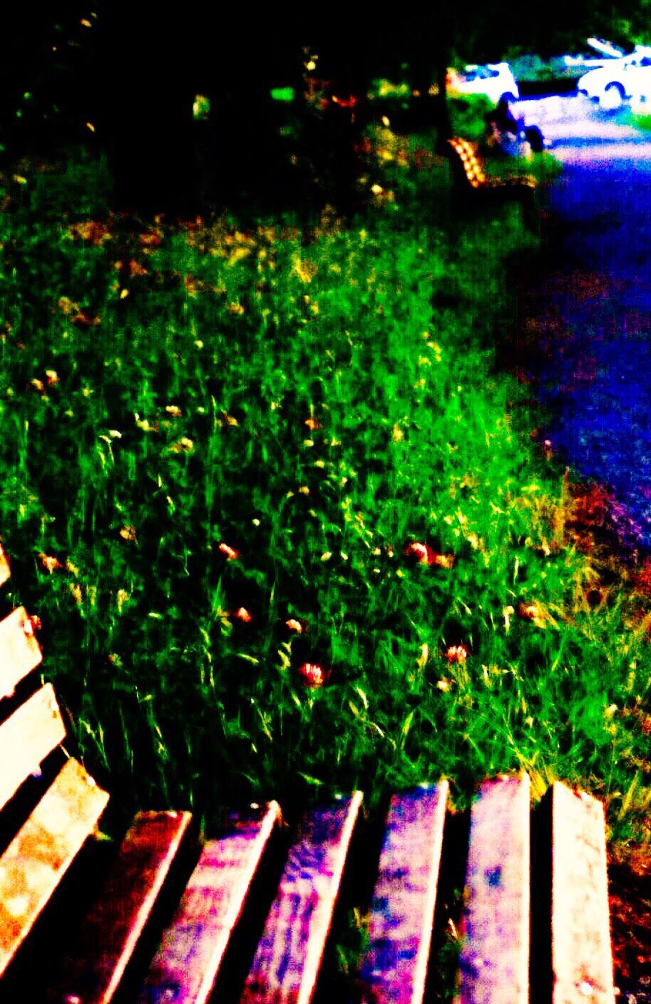 Bench Green Color Outdoors Plant No People Growth Day Illuminated Grass Nature EyeEmNewHere
