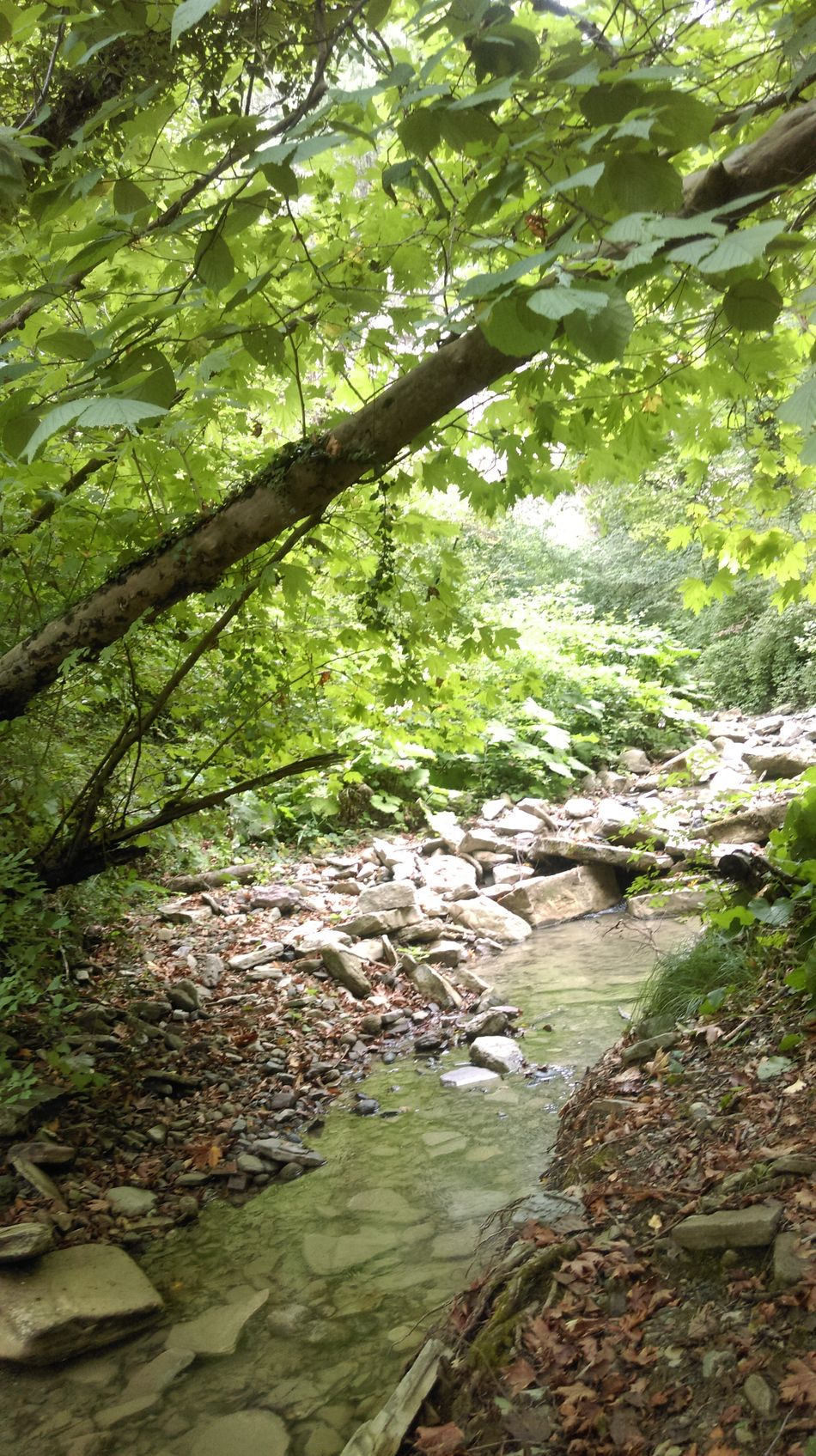 TakeoverContrast nature Forest Water Green Color Tree Non-urban Scene Branch Growth River Tranquility Stream WoodLand Flowing Tree Trunk Beauty In Nature Wilderness Nature Scenics Tranquil Scene Flowing Water Day Low Section High Angle View Outdoors Overhead View