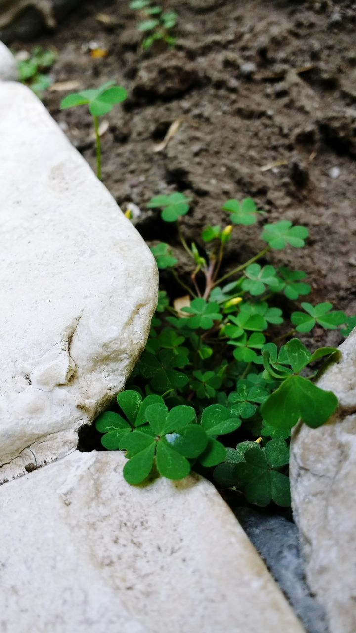 leaf, plant, growth, no people, close-up, high angle view, rock - object, nature, day, outdoors, fragility, freshness, beauty in nature