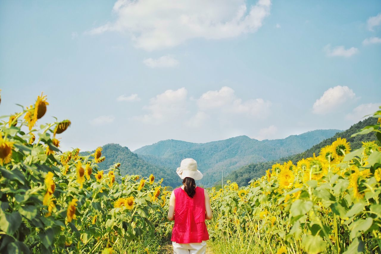Beautiful stock photos of sunflower, Beauty In Nature, Casual Clothing, Day, Field