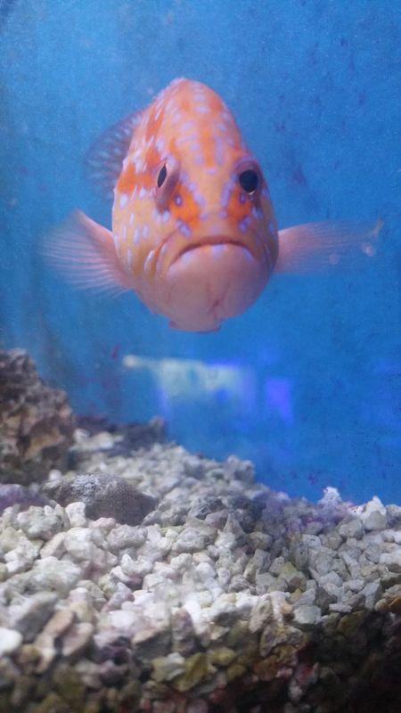 Underwater Aquarium Sea Life Animal Themes Fish UnderSea Blue Water Close-up No People Nature Animal Wildlife Nature UnderSea Sea Indoors