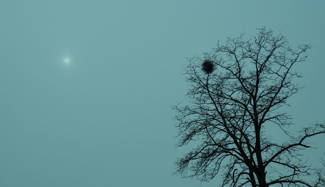 Bare Tree Beauty In Nature Bird Nest Bird Nest On The Tree Blue Branch Clear Sky Copy Space Dusk Growth High Section Low Angle View Mist Misty Morning Moon Nature No People Outdoors Scenics Silhouette Sky Sun In Clouds Tranquil Scene Tree