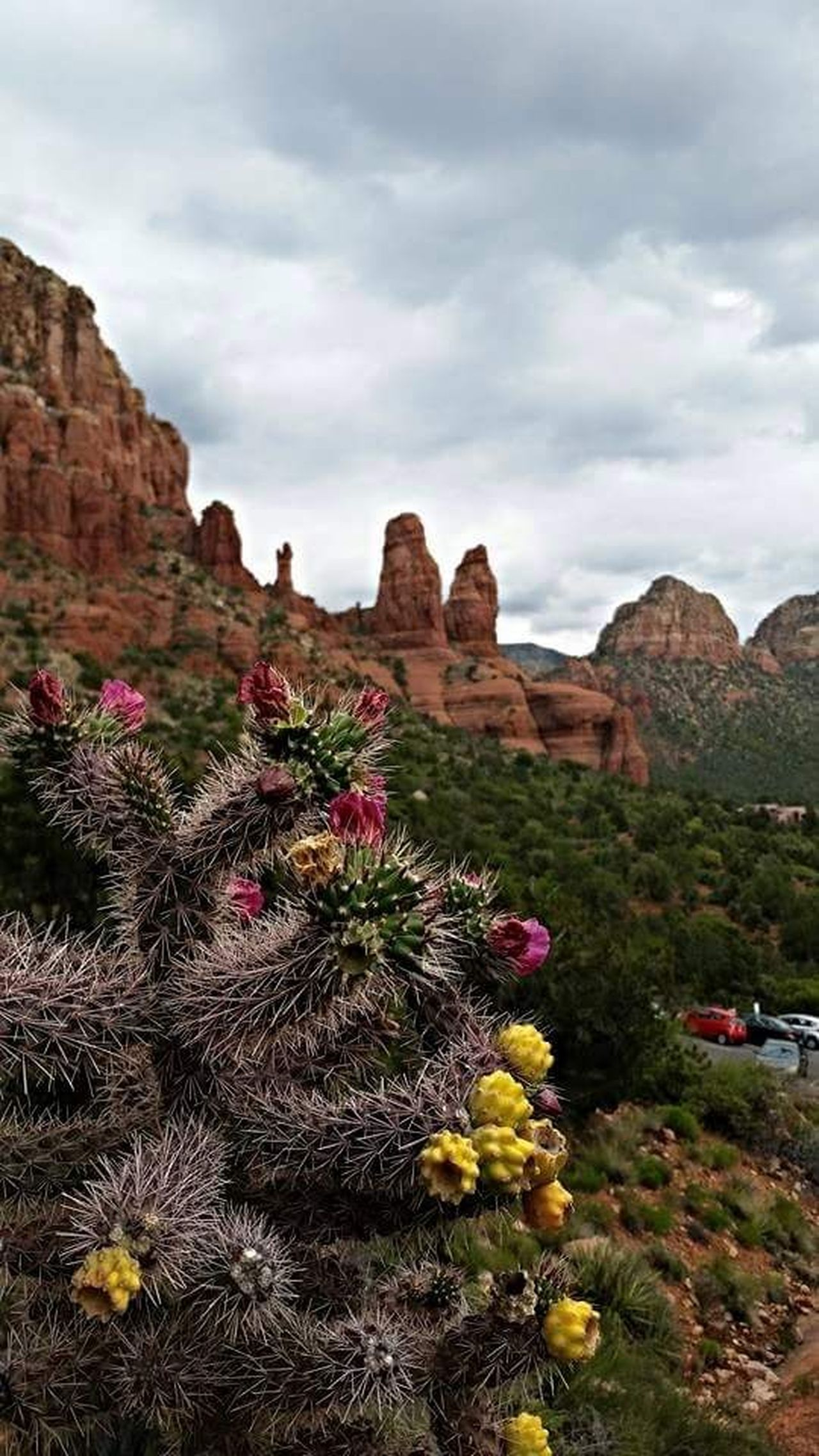 Travel Destinations Landscape Scenics Beauty In Nature Outdoors Rock Formation Sedona, Arizona Cactus Redrocks No People Sky Nature_collection Travel Arizona Landscape Landscape_lovers Sonoran Desert Hiking Trail