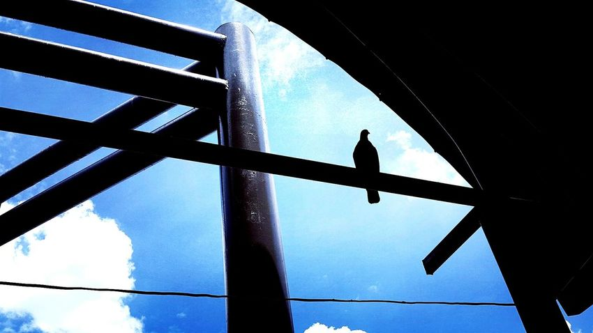 Little bird in the Little world. 🌍🕊Nature's Diversities Bird Bird House Sky Silhouette