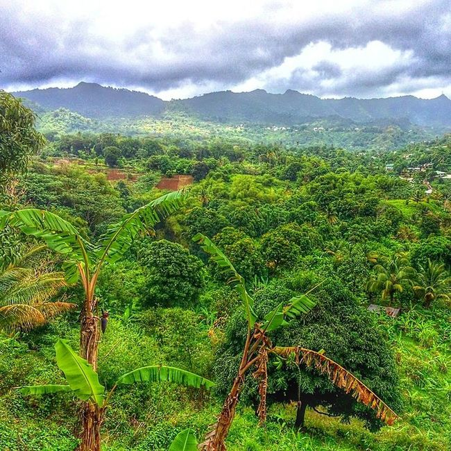 Hdrstylesgf Hdrzone Ilivewhereyouvacation Islandlivity Ig_caribbean Westindies_pictures Westindies_nature Worldwide_shot Wu_caribbean Allshots_ Awesomecaptures Landscape Hike Outdoor Grenada