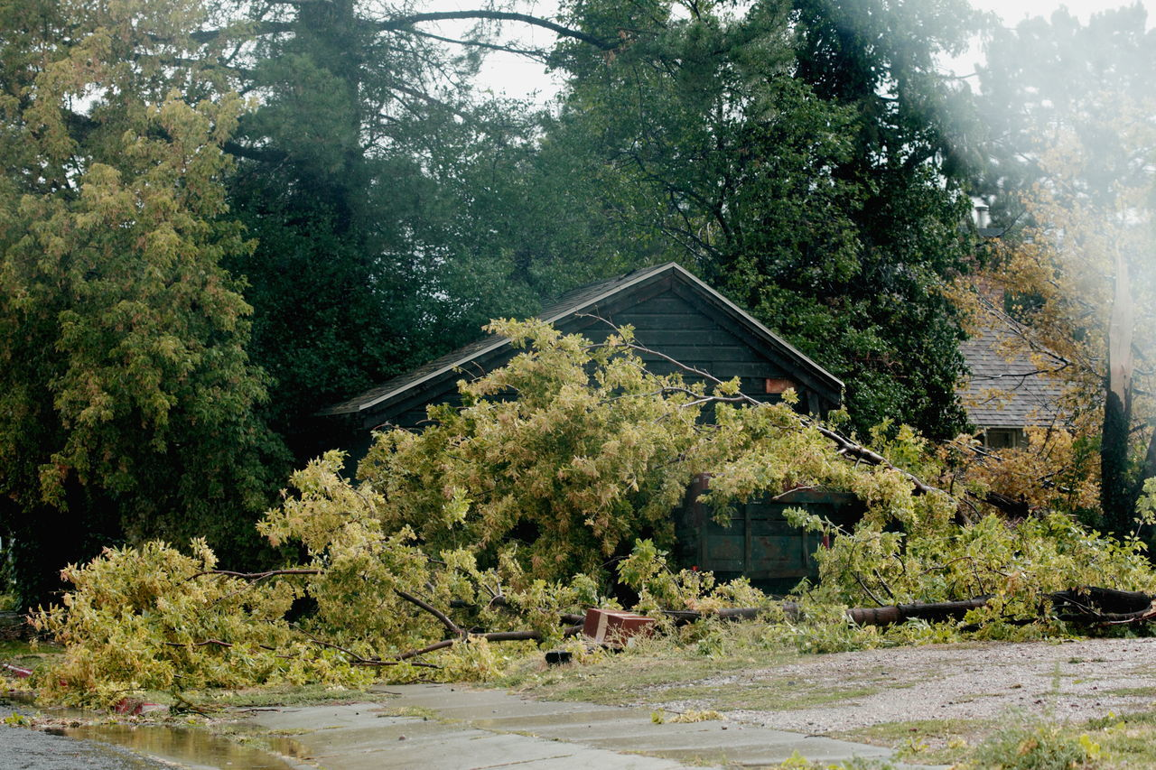 Beautiful stock photos of tornado, tree, no people, green color, built structure