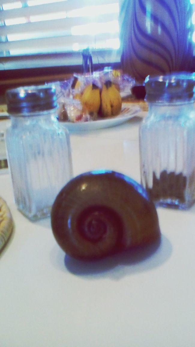 A Giant Fresh Water Snail!!! Had To Take It From 5'i