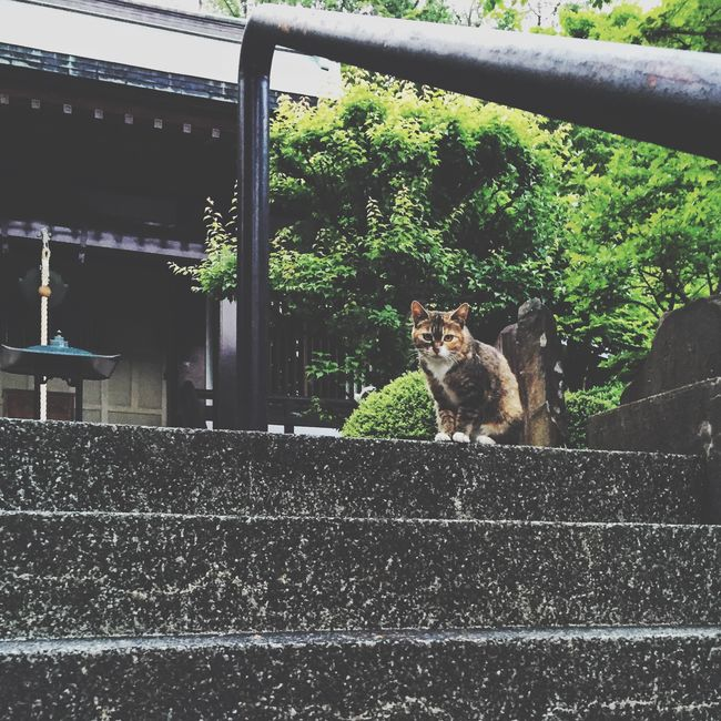 Cat Lovers Cat IPhoneography Iphonephotography Animals Low Angle View Green Japan Animal_collection