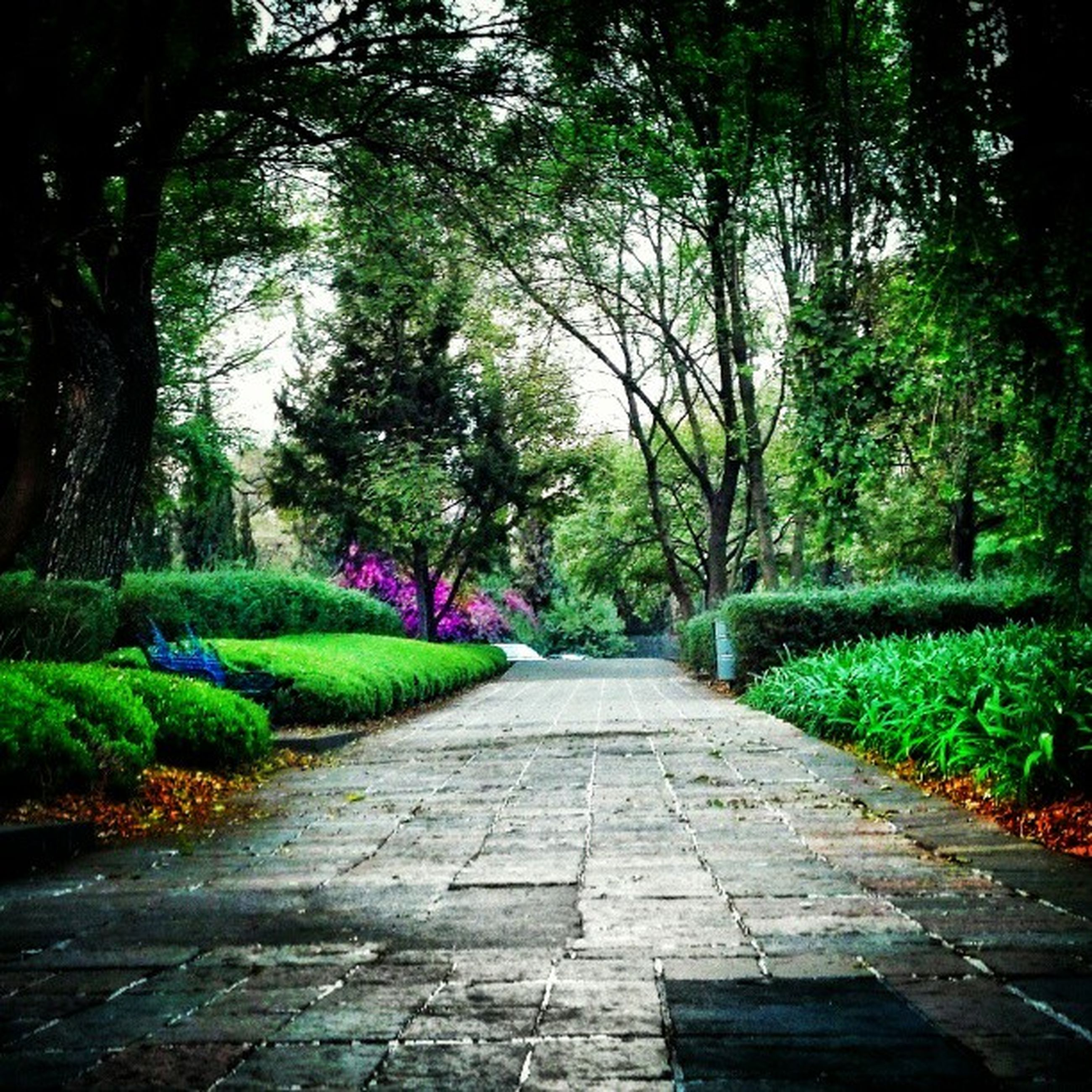 the way forward, tree, growth, green color, footpath, nature, diminishing perspective, tranquility, beauty in nature, walkway, park - man made space, pathway, plant, vanishing point, tranquil scene, lush foliage, narrow, grass, outdoors, scenics
