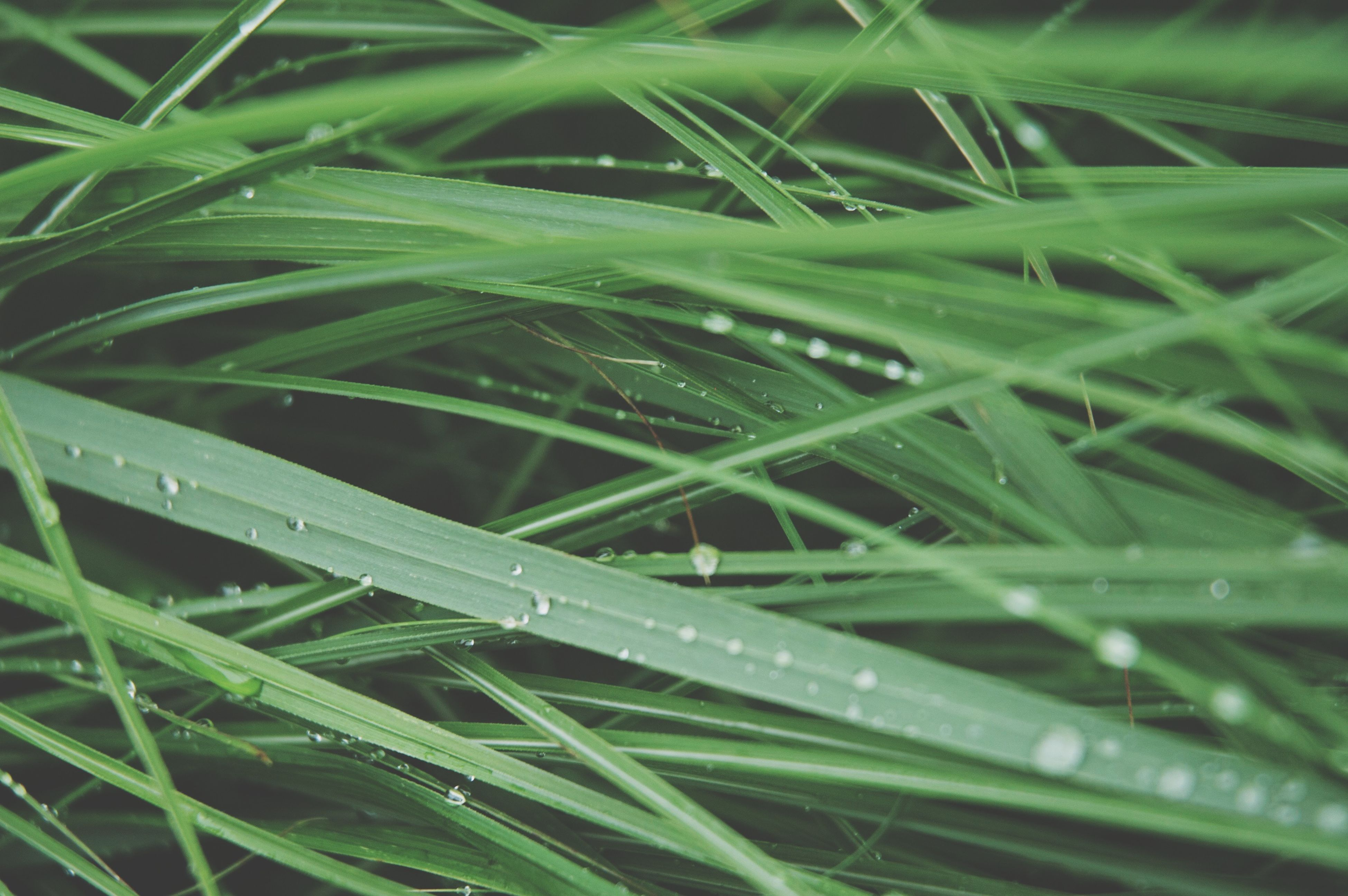 drop, green color, wet, grass, water, growth, dew, blade of grass, nature, close-up, beauty in nature, freshness, backgrounds, full frame, rain, raindrop, plant, leaf, field, outdoors