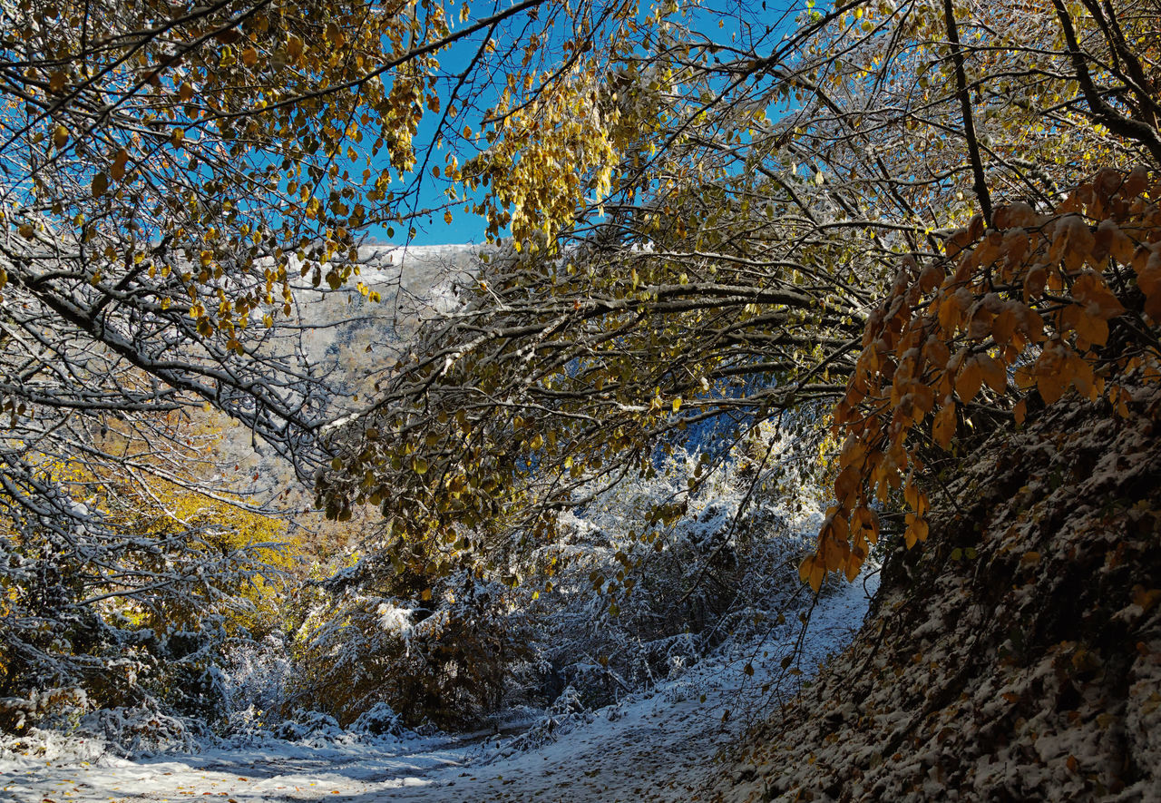 Snowy Backroads Backroads Beauty In Nature Bolu..TURKEY Branches Branches And Sky Cold Temperature Leaves Mountains Nature Roads Sky Snowy Tree Treescape Winter Winter Wonderland Wintertime