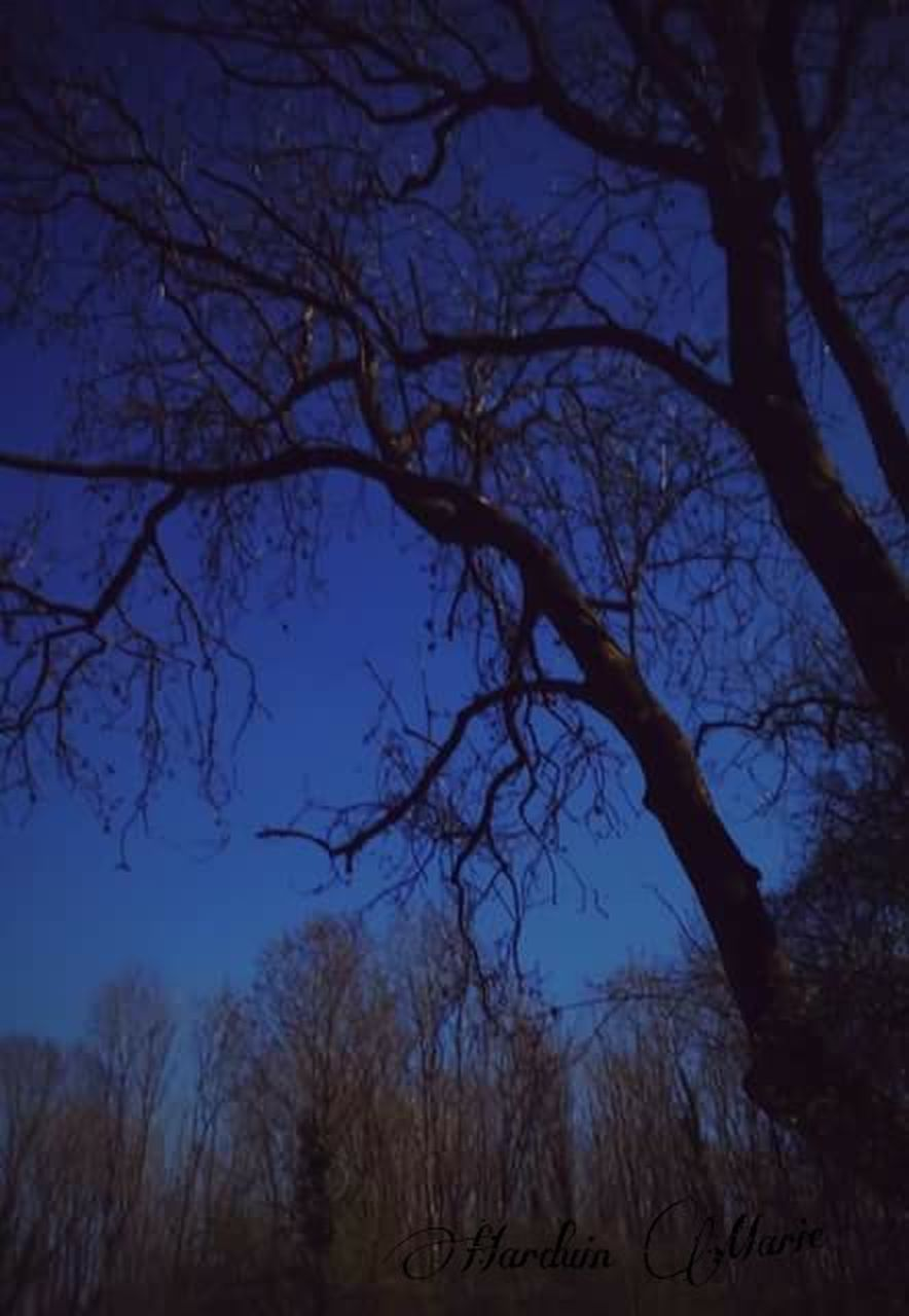 bare tree, tree, branch, nature, tranquility, no people, beauty in nature, outdoors, scenics, night, tranquil scene, winter, landscape, sky