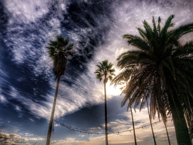 Clouds And Sky Sky_collection Beachphotography Nature_collection Tree_collection