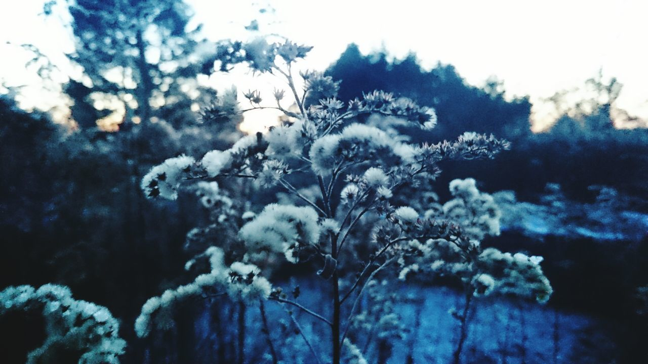 winter, nature, cold temperature, beauty in nature, snow, tree, no people, weather, growth, outdoors, focus on foreground, day, fragility, tranquility, frozen, plant, close-up, scenics, freshness, branch, sky