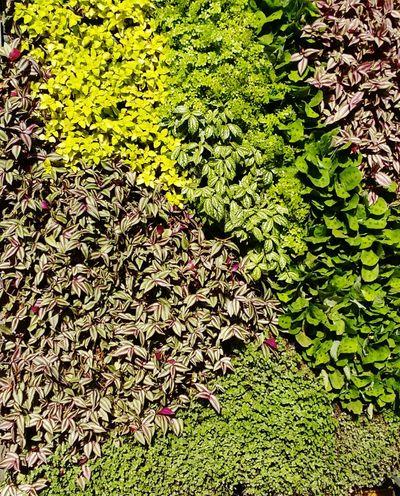 Tapiz verde... Hello World Nature Flower Tapiz Ecology Forest Parque Ecologico