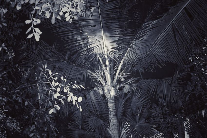 Thailand Photos Treepark Beach Plant Plam Leaves Night View Nightlife Travel Freshness No People Nature Close-up Concentric Outdoors Fragility Day Night Life Is A Beach Light And Shadows Black And White Friday Beauty In Nature Night Lights Garden Streamzoofamily