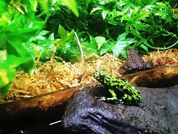 Poisonous Frogs🐸 Lushgreen Awesomecreation Hanging Out Taking Photos x