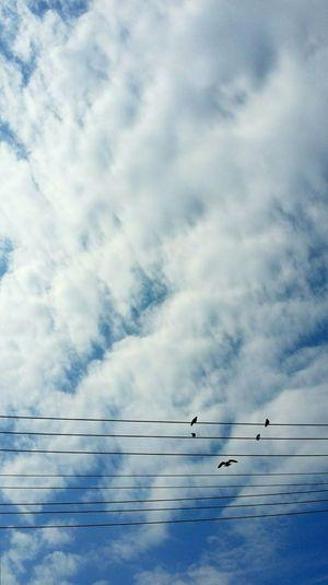ひげ💨~moustache😁My Mo For Movember Moustache Birds From My Point Of View EyeEm Animal Lover Sky Sky_collection Moments Electric Wire FUNNY ANIMALS