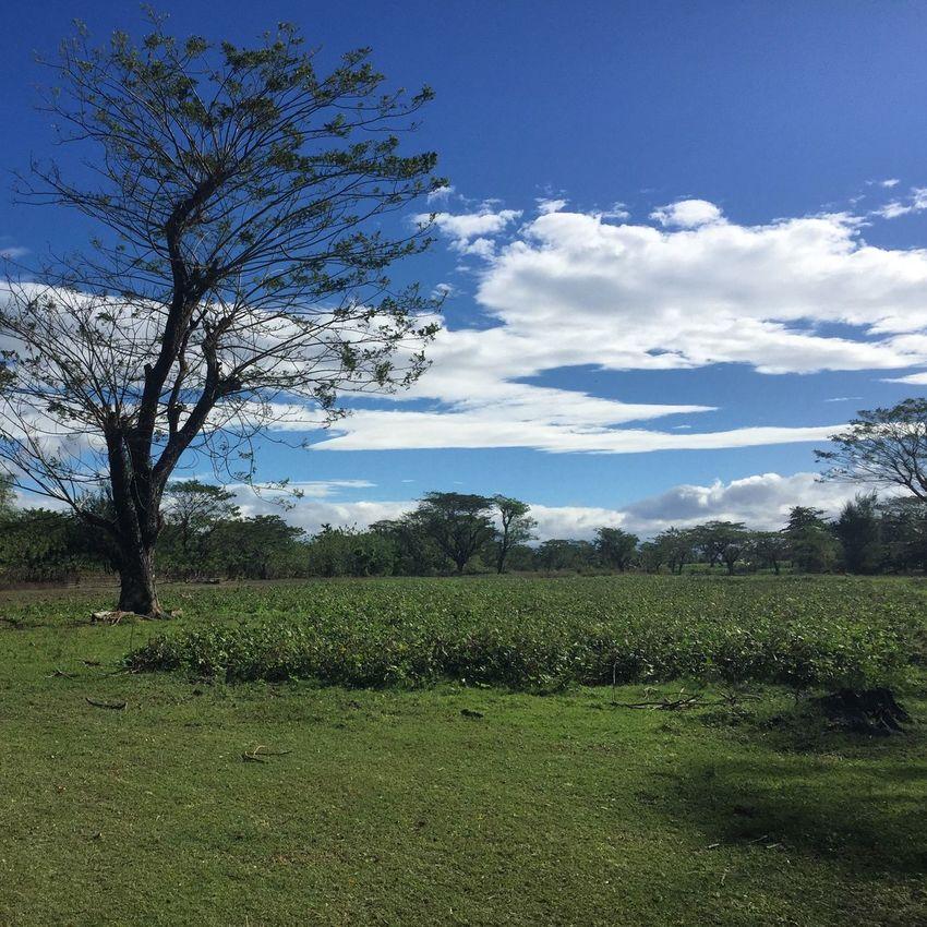 Refreshing.. Welcome2016 Occidentalmindoro EyeemPhilippines Nature