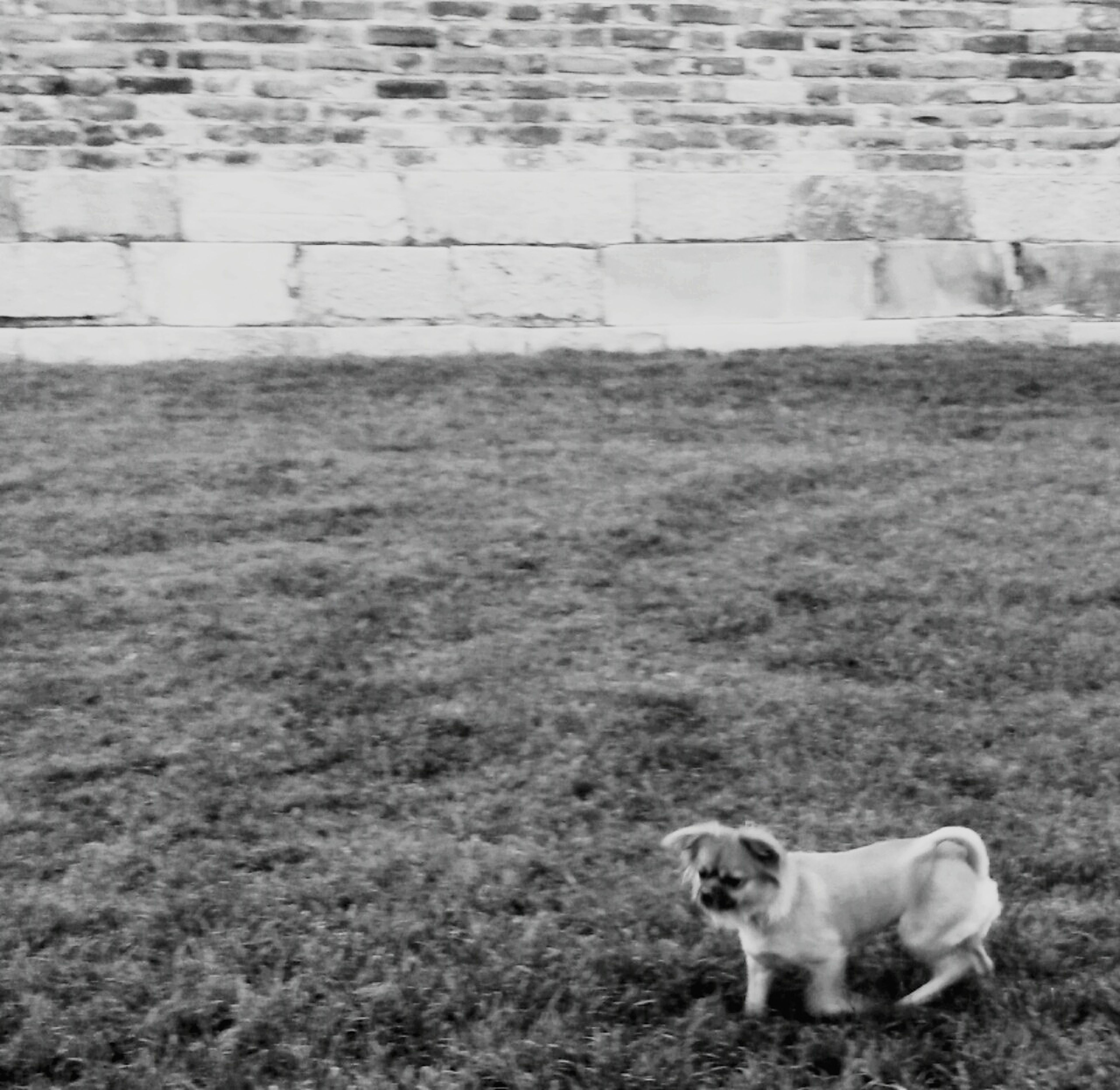 domestic animals, animal themes, mammal, pets, dog, one animal, grass, field, high angle view, two animals, no people, outdoors, day, built structure, building exterior, full length, architecture, nature, canine, grassy