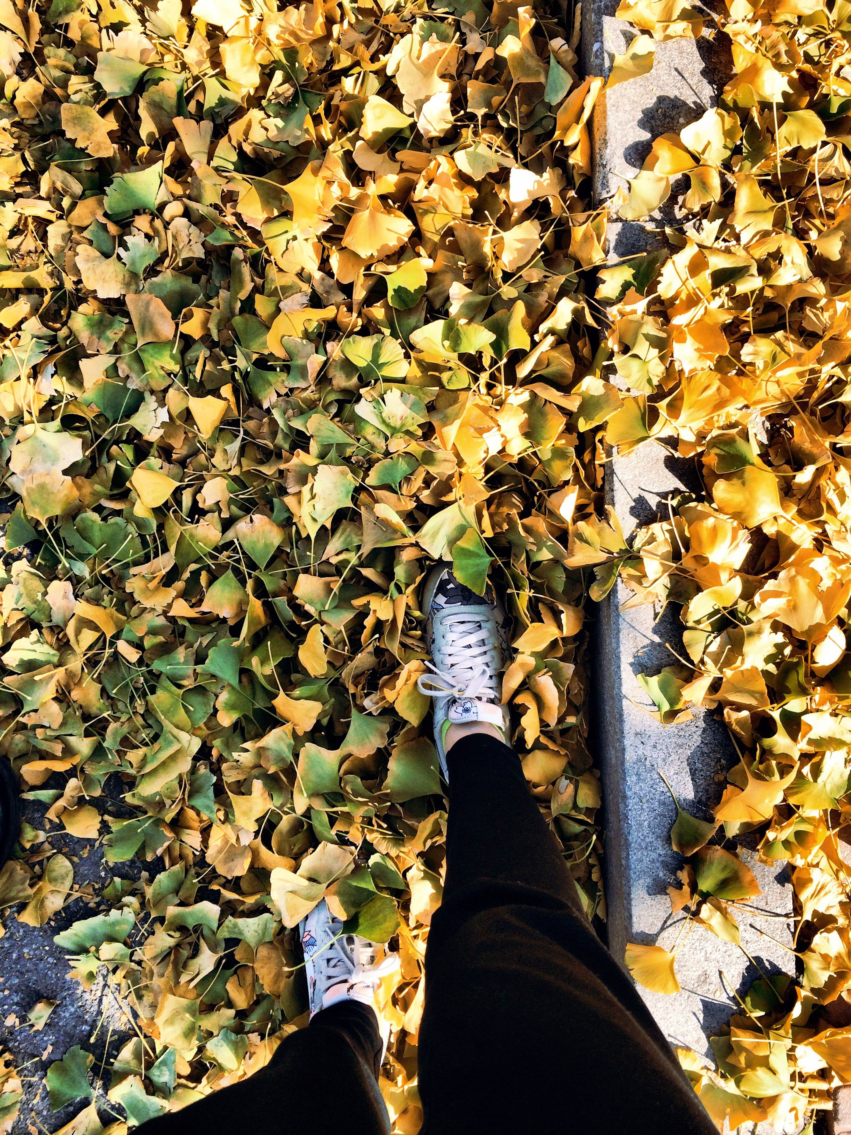 low section, person, personal perspective, shoe, standing, leaf, autumn, lifestyles, season, human foot, change, leaves, footwear, leisure activity, high angle view, jeans, men