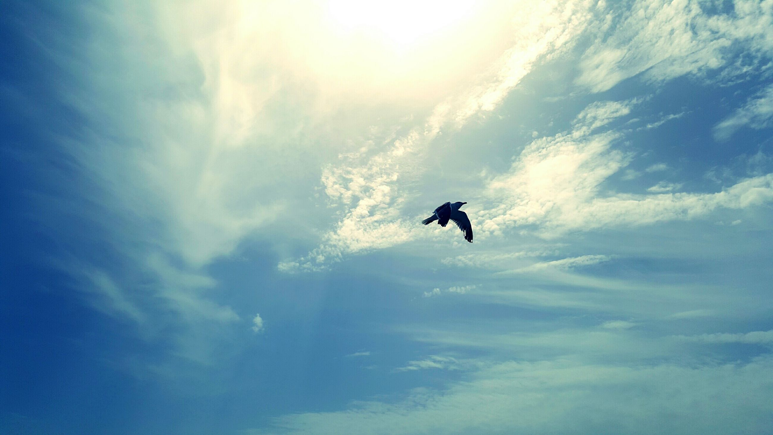 flying, mid-air, low angle view, sky, cloud - sky, nature, cloud, beauty in nature, scenics, tranquility, outdoors, blue, day, tranquil scene, non-urban scene, vacations, carefree, adventure