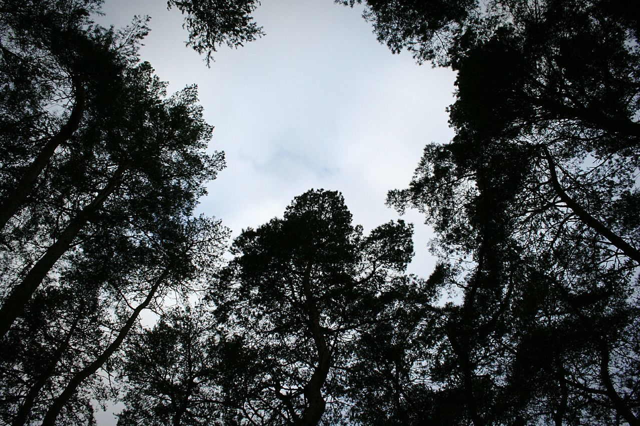 tree, low angle view, nature, growth, beauty in nature, outdoors, forest, branch, no people, sky, day, high