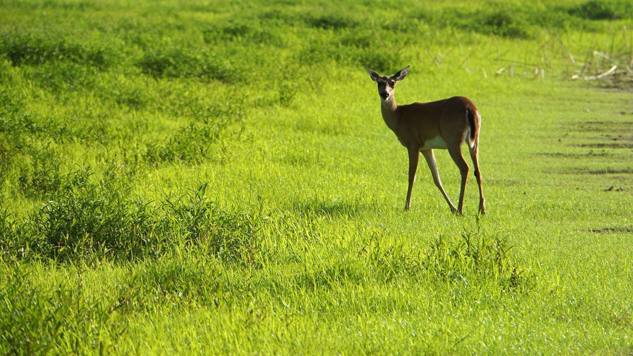 Beautiful stock photos of deer, , Animal Themes, Beauty In Nature, Day