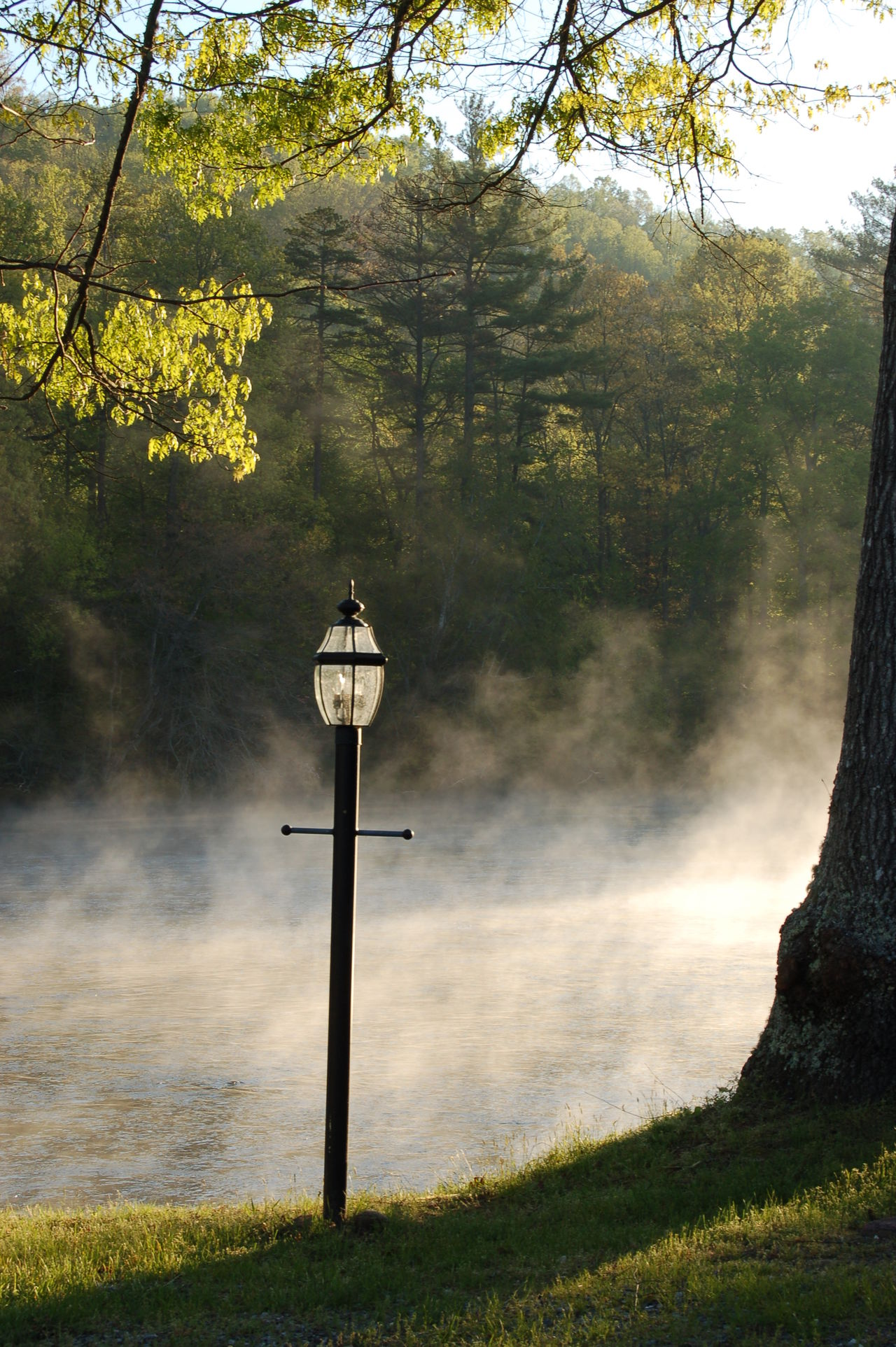 Beauty In Nature Competitive Sport Dampf Day Fog Foggy Foggy Morning Lamp Light And Shadow Morning Nature No People Outdoors Scenics Street Lamp Tranquility Tree Wonderful Moment