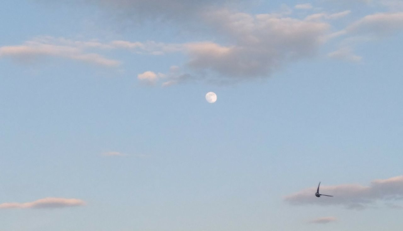 sky, flying, moon, low angle view, cloud - sky, nature, airplane, air vehicle, outdoors, mid-air, no people, beauty in nature, scenics, vapor trail, day, airshow, fighter plane, astronomy