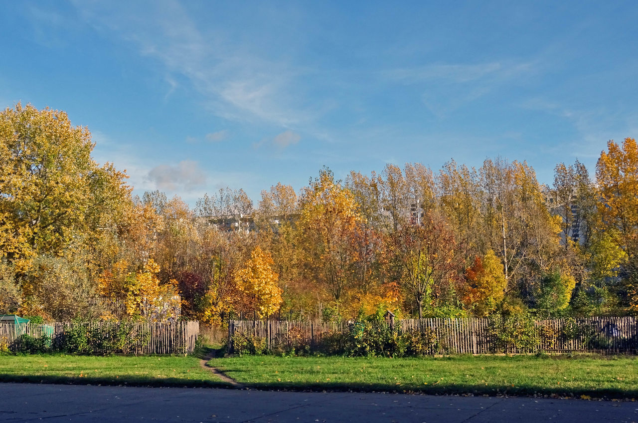 Autumn Autumn Colors Autumn Leaves Beauty In Nature Berlin Berlin Photography Germany Grass Herbst Herbststimmung Marzahn Nature No People Outdoors Tree Autumn Collection Autumn Colours Herbstfarben