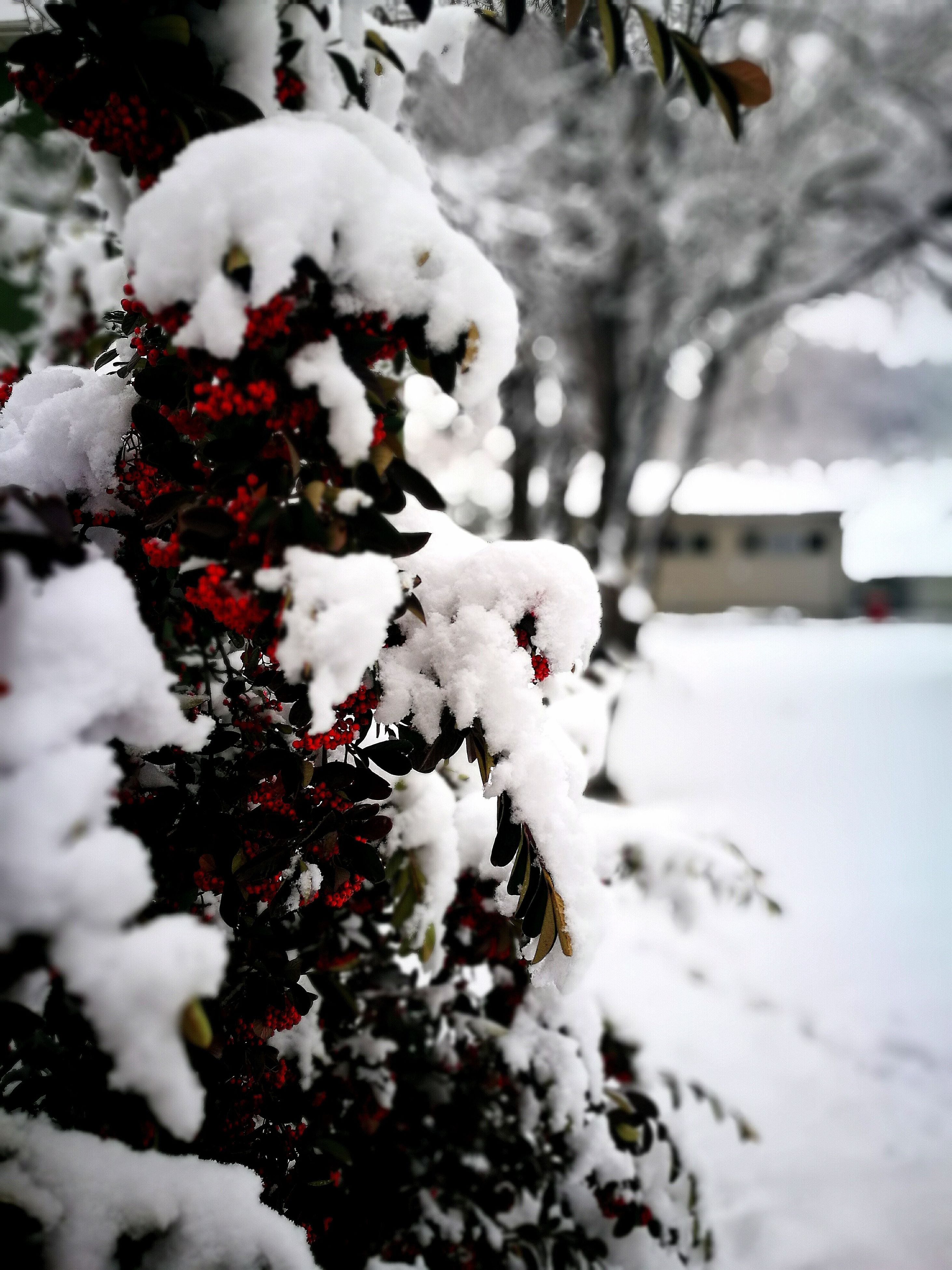 winter, snow, christmas, focus on foreground, cold temperature, tree, close-up, white color, outdoors, christmas decoration, snowman, celebration, day, christmas tree, no people, nature, christmas ornament, christmas market