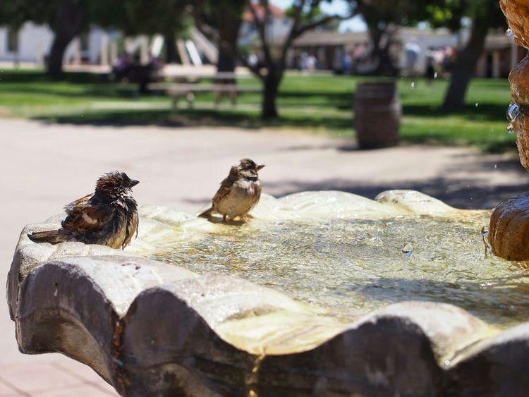 Sparrows Birds Nature Summer ShowerTime Enjoying Life Hello World Travel San Diego Cute♡