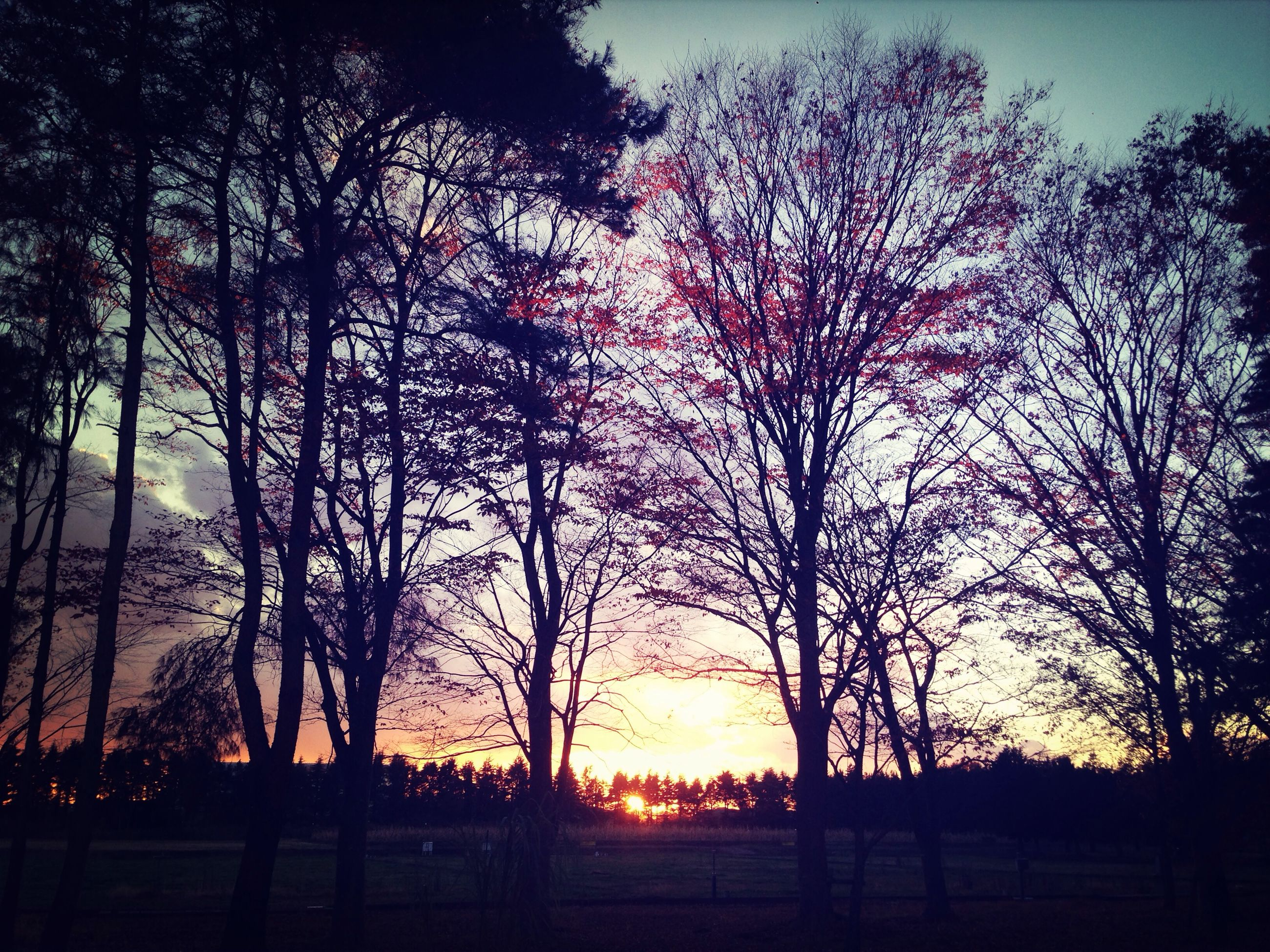 sunset, silhouette, tree, tranquil scene, tranquility, scenics, beauty in nature, bare tree, nature, sky, orange color, idyllic, landscape, branch, sun, field, growth, non-urban scene, outdoors, tree trunk