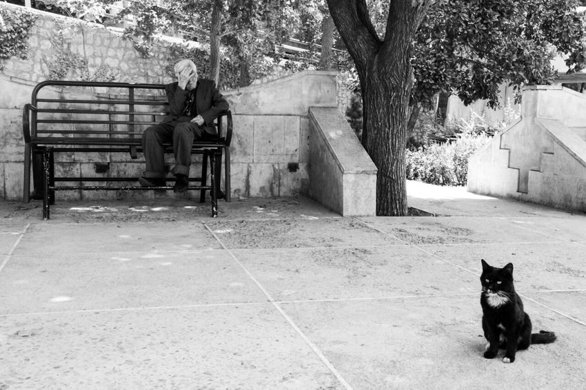 Black And White Old Man Iranian Persiancat Alone Alone Time Black Cat