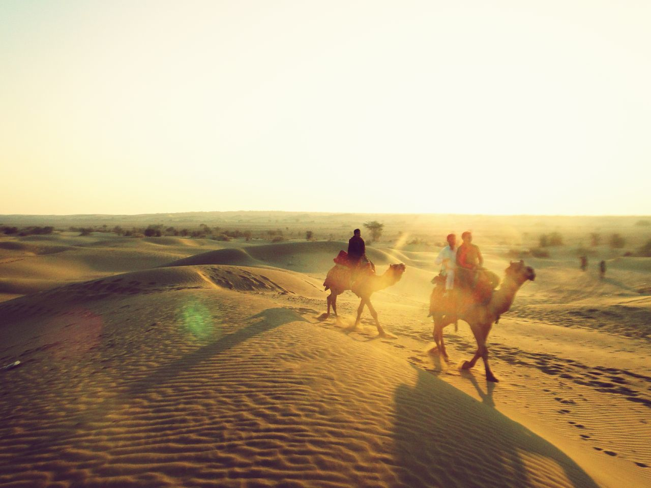 Beautiful stock photos of camel, Animal Themes, Beauty In Nature, Camel, Copy Space