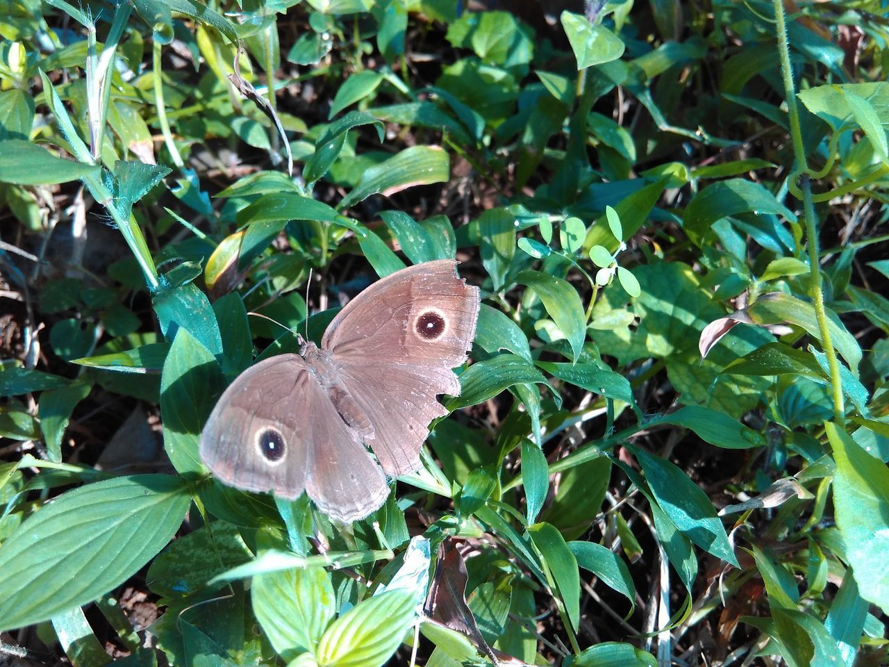 one animal, leaf, plant, animal themes, animals in the wild, green color, butterfly - insect, nature, animal wildlife, growth, insect, outdoors, butterfly, no people, day, close-up, perching, beauty in nature