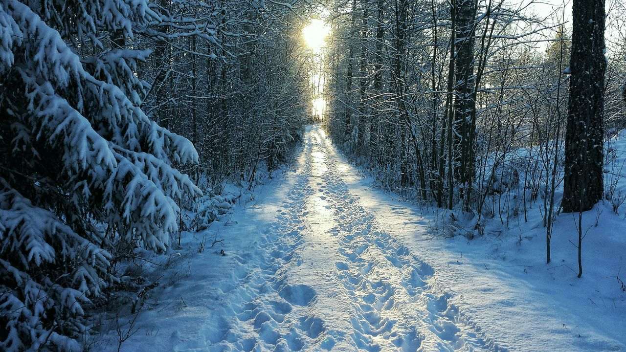 Beautiful stock photos of path, Back Lit, Cold Temperature, Covering, Day