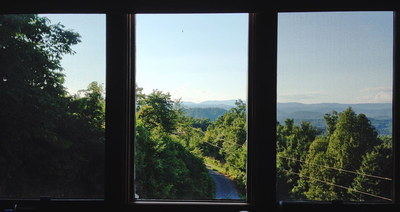 tree, window, nature, mountain, landscape, growth, no people, indoors, tranquil scene, scenics, forest, day, beauty in nature, sky, green color, close-up