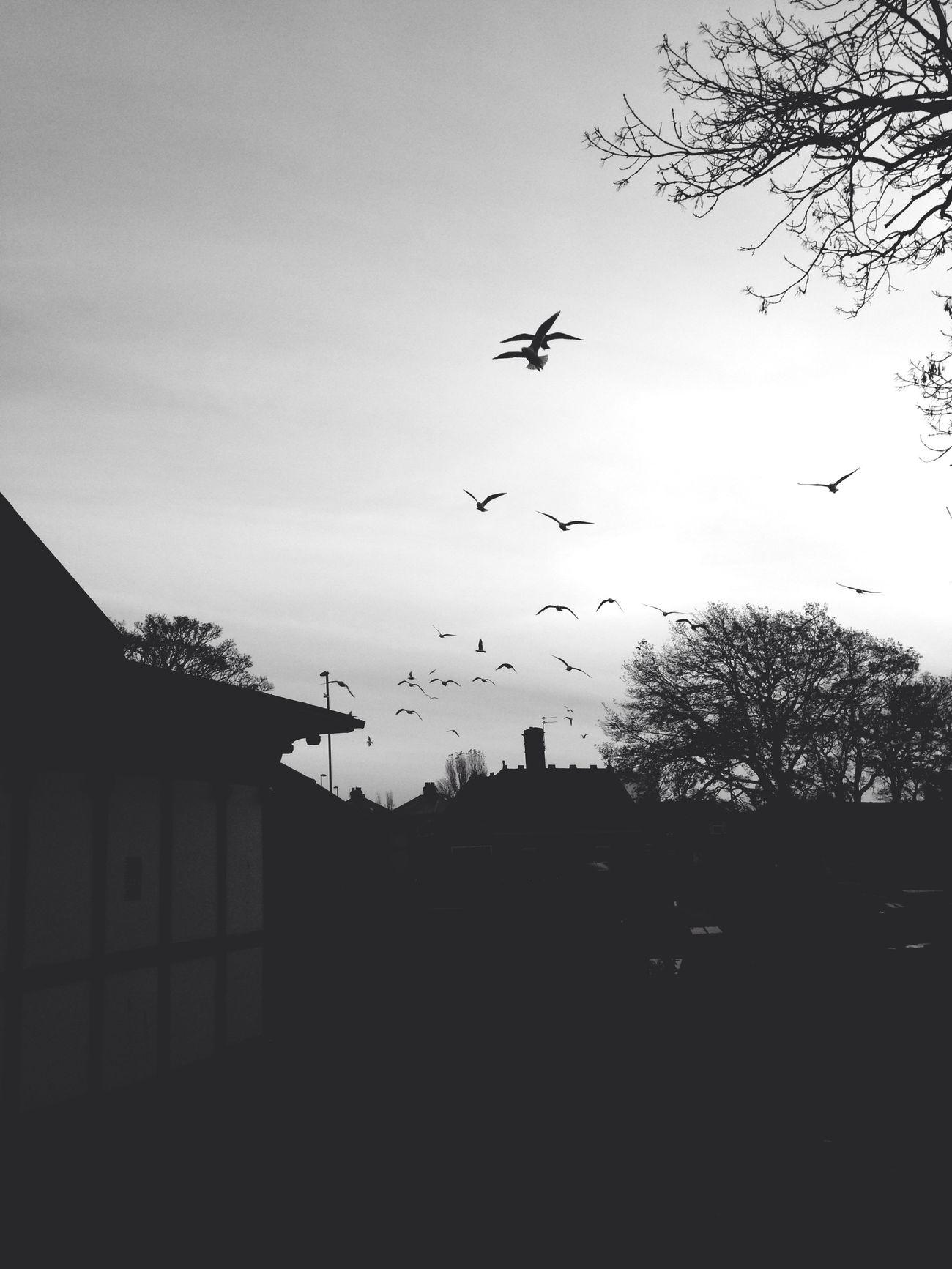 Birds Blackandwhite Fortheloveofblackandwhite Scenery