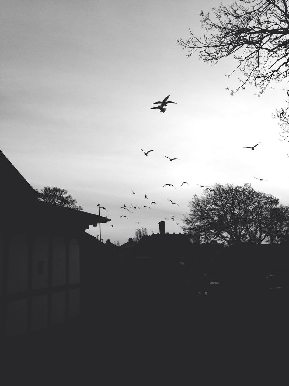 Birds Blackandwhite Fortheloveofblackandwhite Scenery