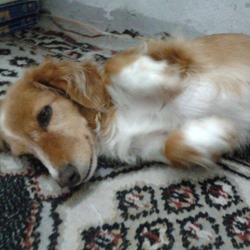 own, virei um coelhinho! :3 Dog Cute Saiqueeuquerodormir