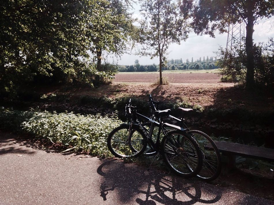The Color Of Sport Tree Field Bicycle Nature Country Road Countryside River Erft Erftstadt Sun Sunshine Green Red Shadow CyclingUnites Cycling