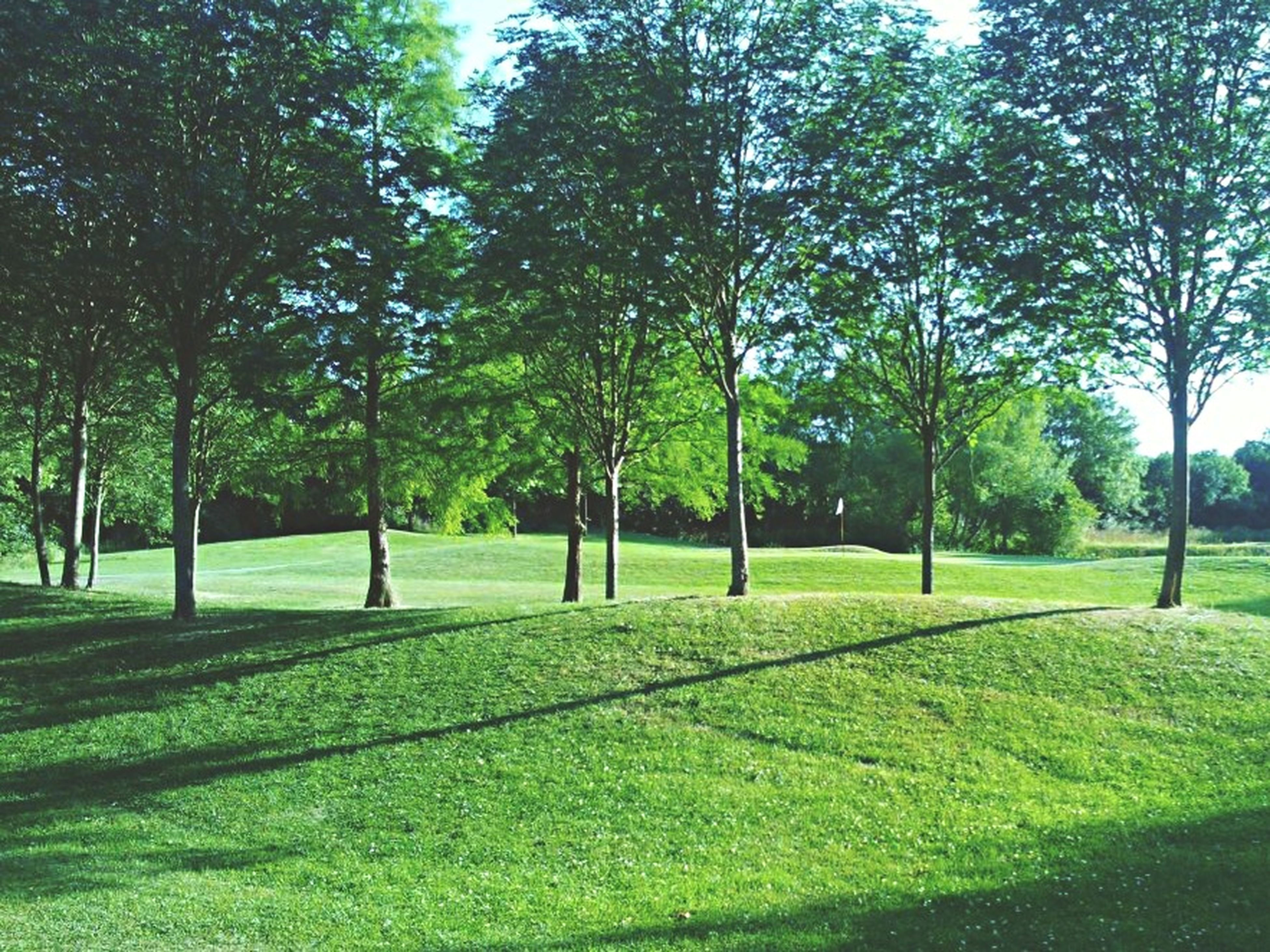 tree, grass, green color, tranquility, growth, tree trunk, grassy, park - man made space, tranquil scene, nature, shadow, field, beauty in nature, landscape, scenics, park, lawn, branch, sunlight, sky