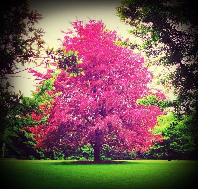 Nature Beauty Trees Outdoors