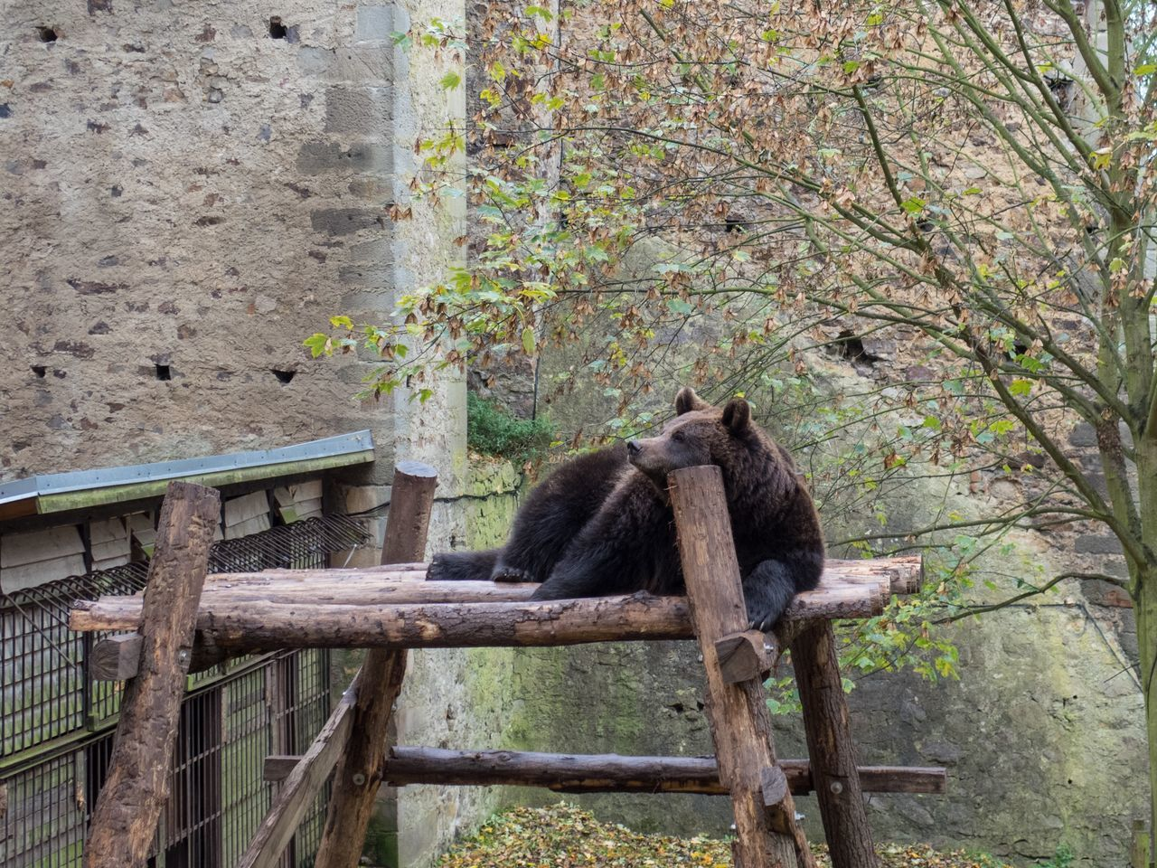 animal themes, mammal, no people, day, one animal, animals in the wild, outdoors, wood - material, animal wildlife, nature, full length, tree