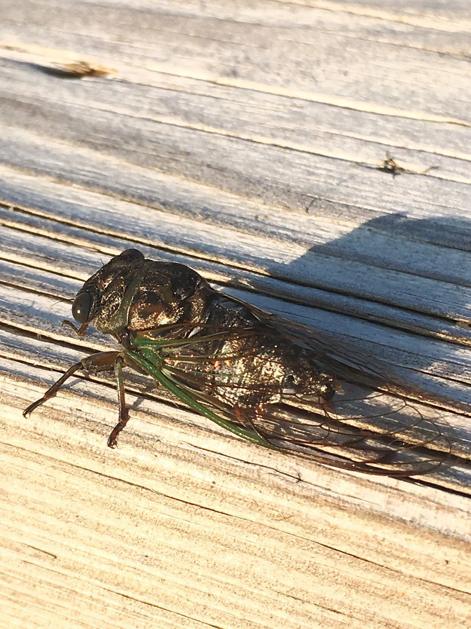 animals in the wild, one animal, animal themes, animal wildlife, wood - material, insect, table, no people, day, outdoors, nature, sunlight, close-up
